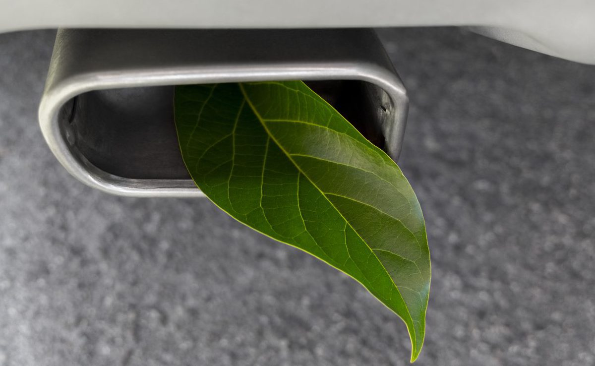 Leaf in a car exhaust
